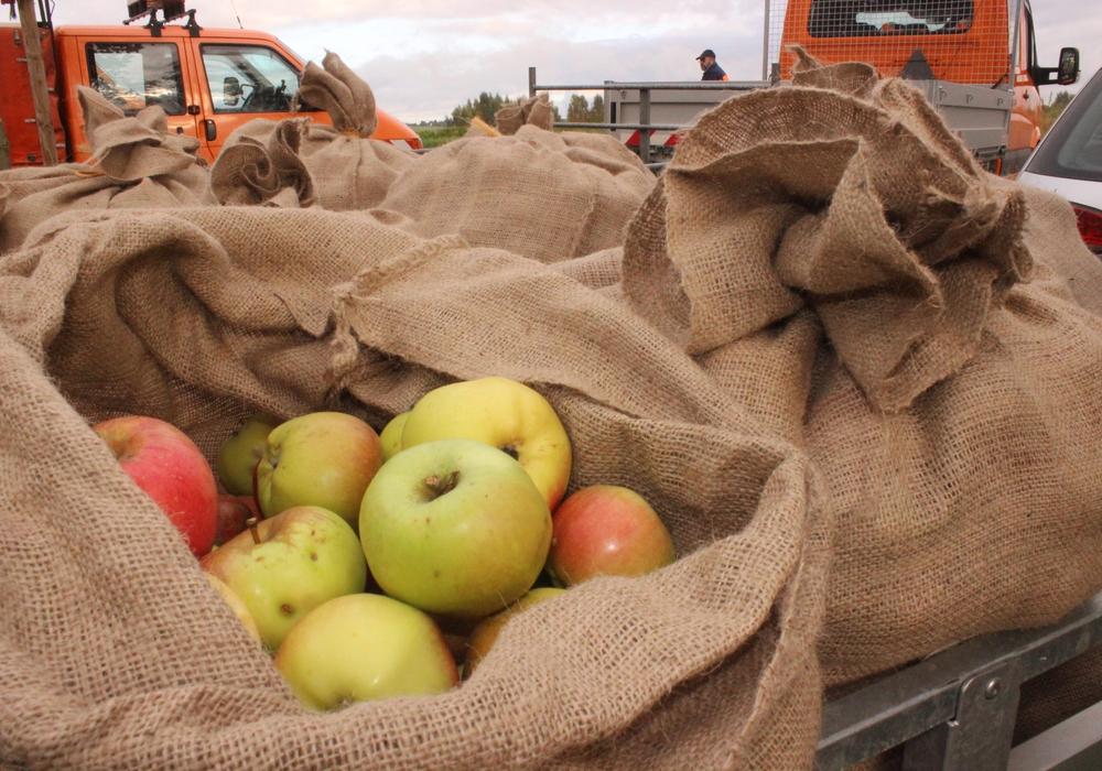Aus den gesammelten Äpfeln konnten 1.800 Liter Apfelsaft gewonnen werden. Foto: Anke Donner