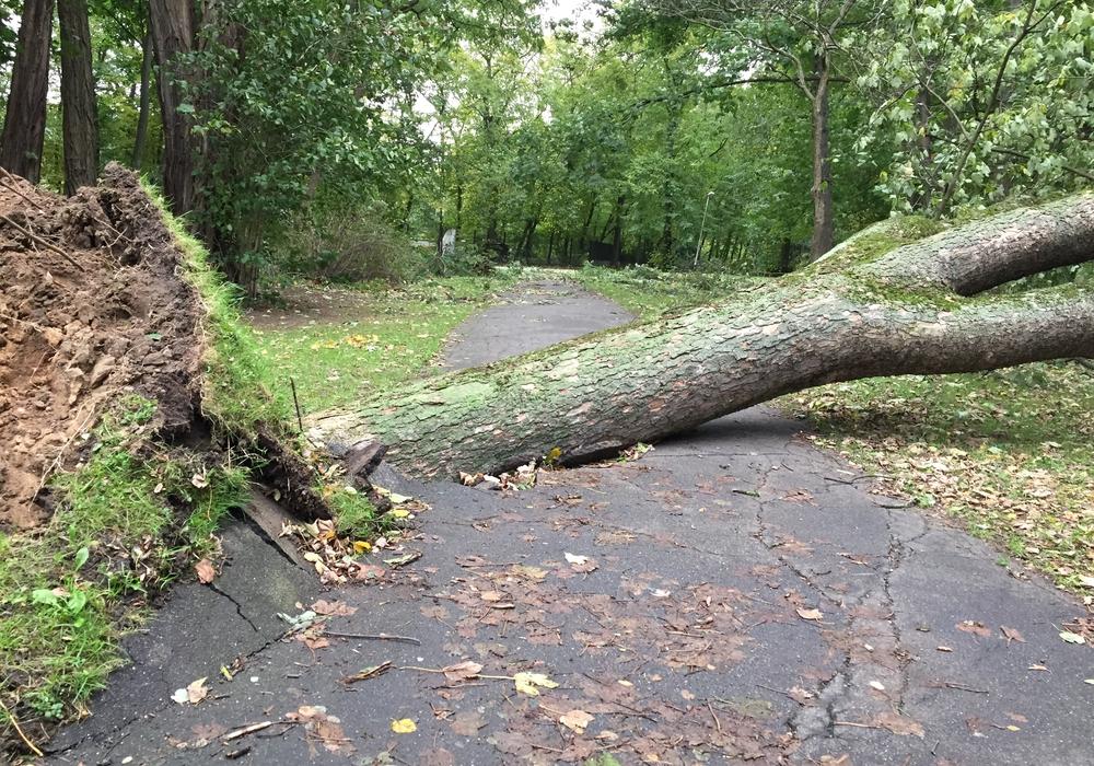In den Wälder und Parkanlagen in und um Braunschweig kann Lebensgefahr aufgrund von Sturmschäden bestehen. Symbolbild: Frank Vollmer