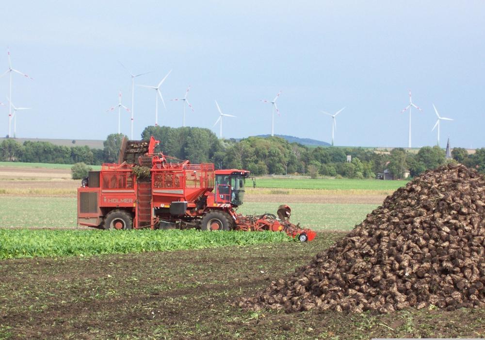 Die Rübenanlieferung in der Zuckerfabrik in Schladen beginnt ab dem 16. September (37. Kalenderwoche). Ungefähr zeitgleich startet auch die Maisernte. Foto: Landkreis Wolfenbüttel