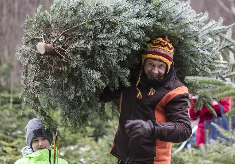 Der Baum gehört zum Weihnachtsfest zwingend dazu. Fotos: Niedersächsische Landesforsten