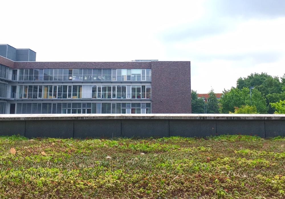 Ein begrüntes Dach in Wolfsburg. Foto: Stadt Wolfsburg