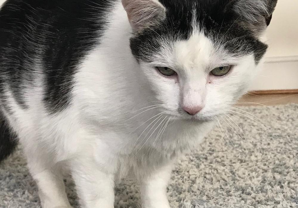 Katzen mit Freigang müssen in Goslar künftig gechippt und kastriert sein. Foto: Stadt Goslar