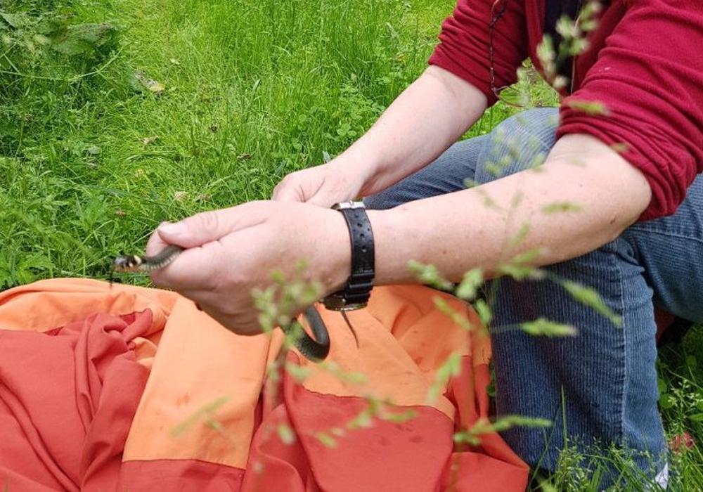 Bärbel Rogoschik, Leiterin Artenschutzzentrum des NABU, setzt die Ringelnatter anschließend aus. Foto: Carsten Schaffhauser, Kreisfeuerwehrpressestelle