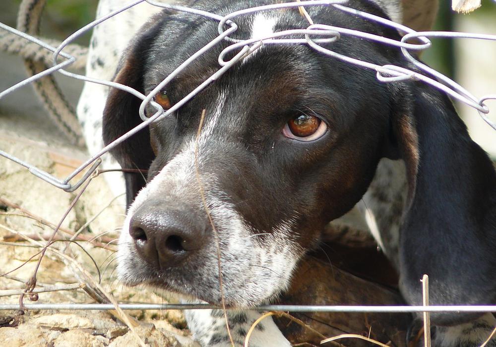 Der Hund, der beste Freund des Menschen. Oft aber nicht so behandelt, wie er es verdient. Symbolfoto: Pixabay