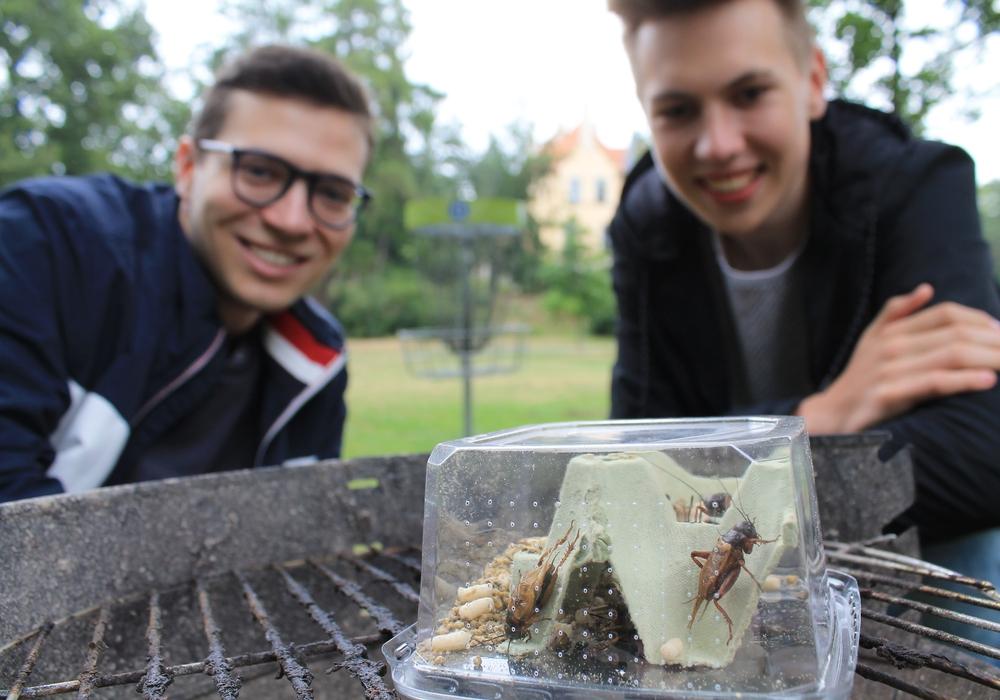 Die Jungen Liberalen Max Weitemeier (links) und Joshua Kasten halten Grillen im Schatten der Seeliger-Villa für eine gute Idee. Foto: Christina Balder
