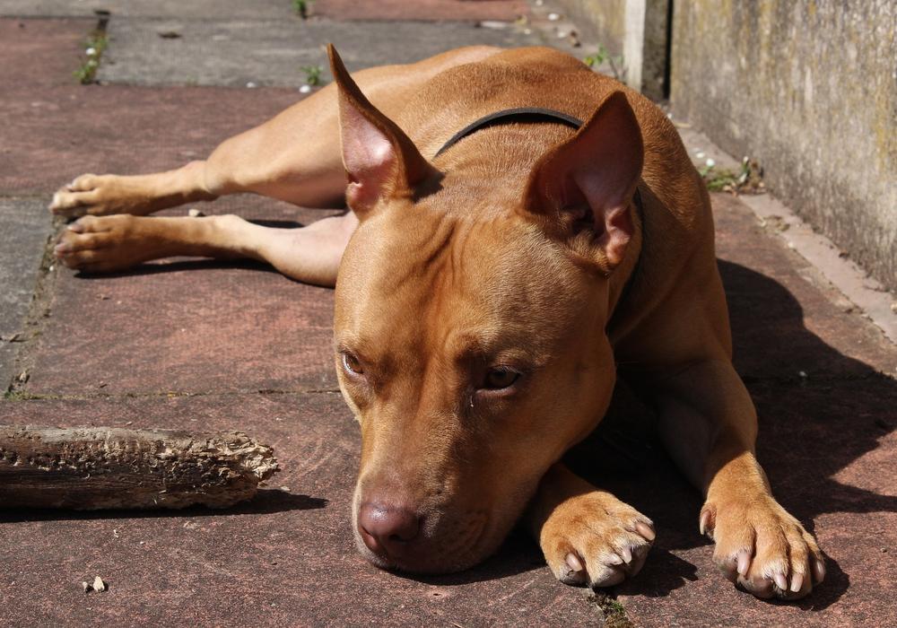 Erste Untersuchungen ergaben, dass der Hund stark unterernährt war. Symbolbild: pixabay