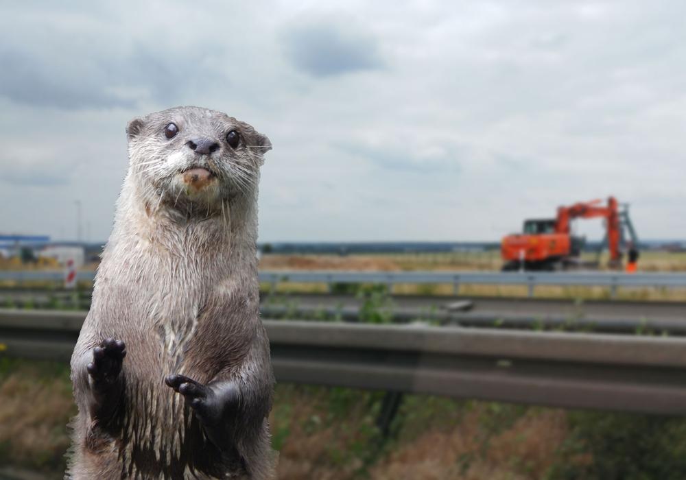 Der Lebensraum der Otter soll geschützt werden. Symbolfoto: Alexander Panknin/Pixabay