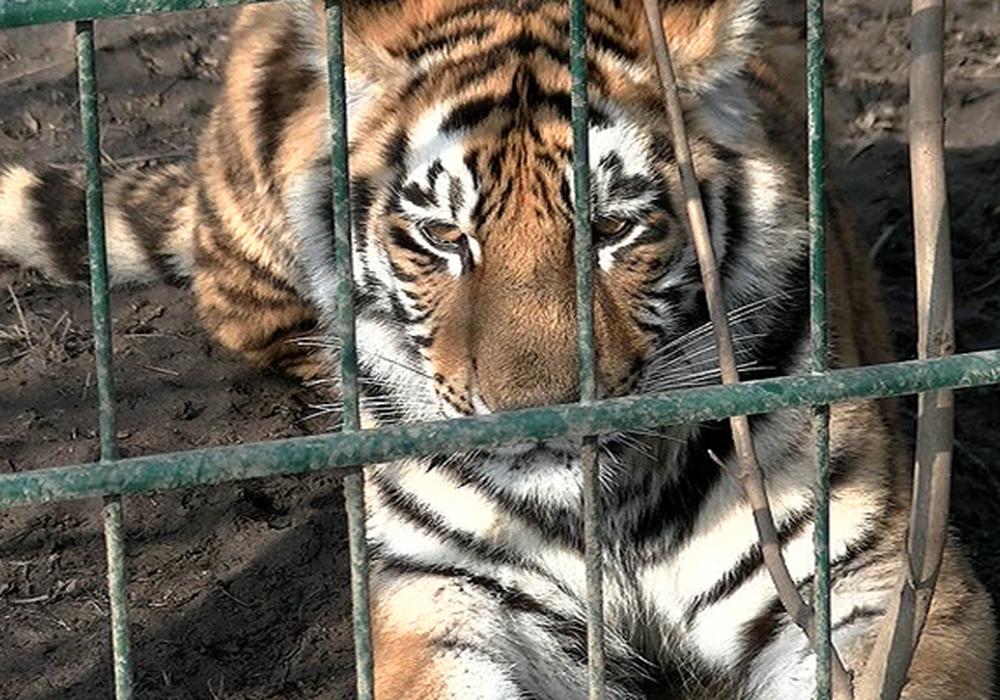 Auch der Braunschweiger Zoo musste mehrere Monate schließen. Archivbild