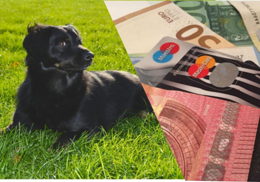 Die zu zahlende Hundesteuer schwankt auch in unserer Region erheblich. Symbolfoto: Nick Wenkel/Anke Donner/Jonas Walter
