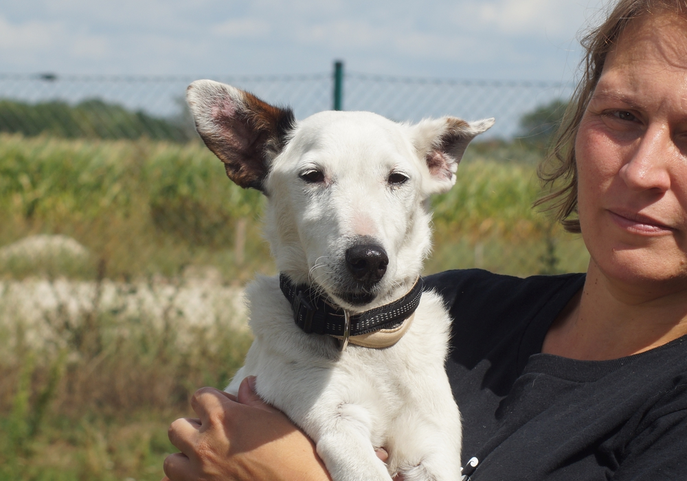 Rudi, ein 12 Jahre alter Terrier. Foto: Tierschutzverein Gifhorn und Umgebung
