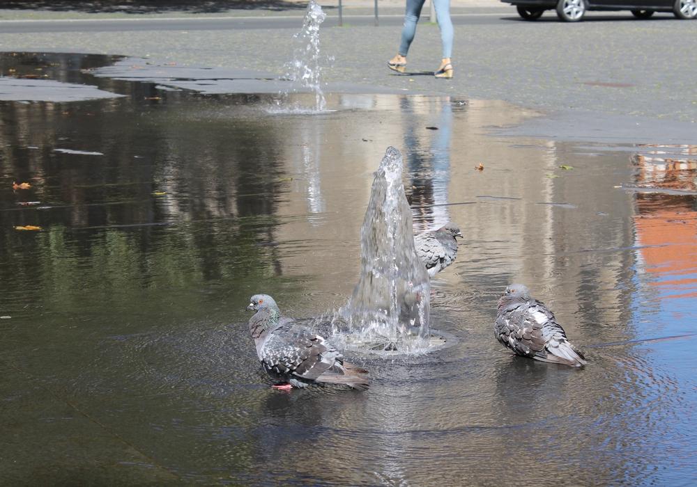 In Braunschweig ist die Zahl der Tauben zurückgegangen. Foto: Balder
