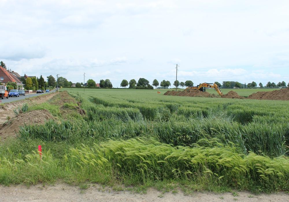 Im Neubaugebiet Uetschenkamp sollen 18 Grundstücke entstehen. Foto: Frederick Becker