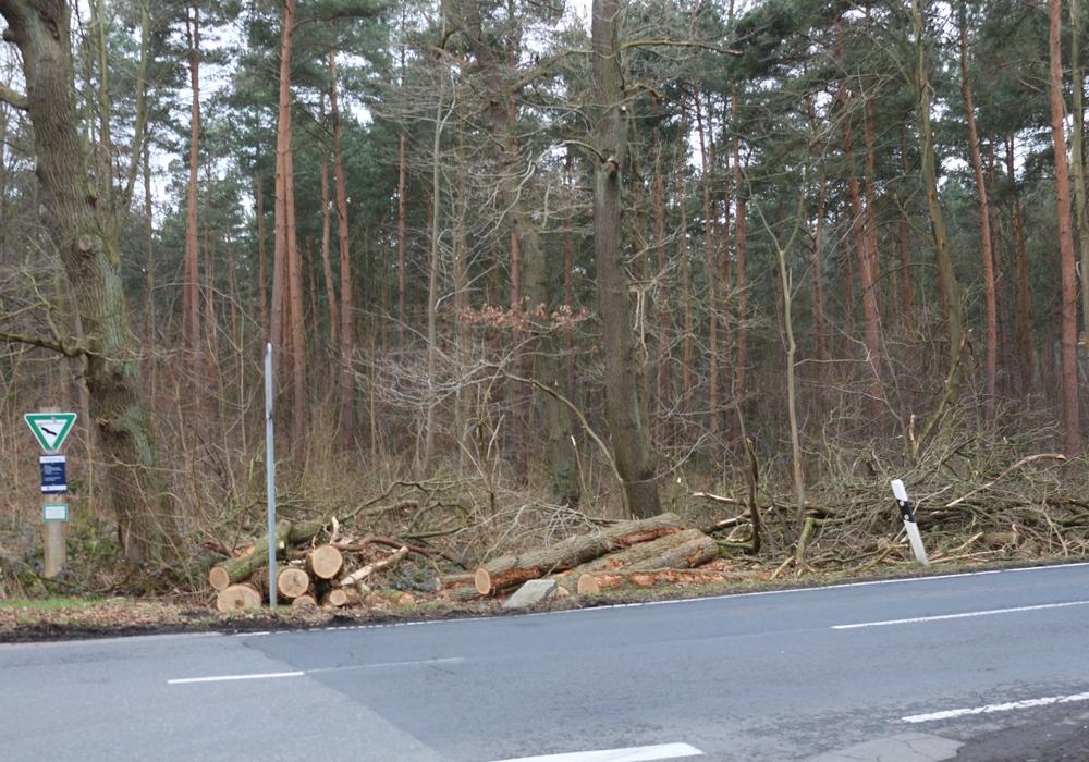 An der nördlichen Schunter müssen Bäume gefällt werden. Symbolfoto: Robert Braumann