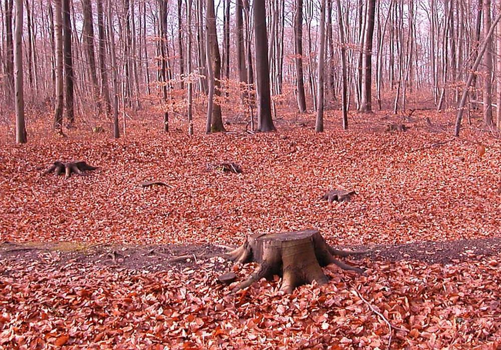 Lechlumer Holz im Herbst, Basis des Grabtempels. Foto: HAB
