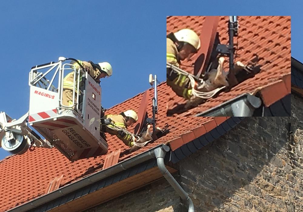 Das Jungtier klemmte zwischen dem Dach und der Satellitenschüssel. Fotos: Maik Wehrmuth