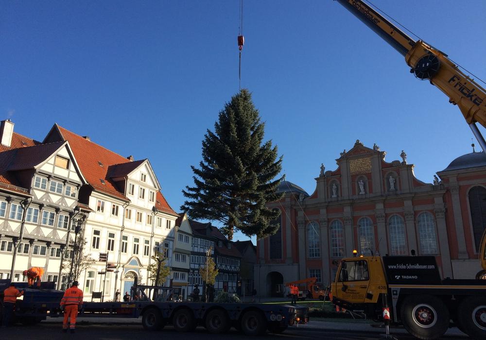 Vor der Trinitatiskirche wurde am Montag die Weihnachtstanne aufgestellt. Foto: Werner Heise