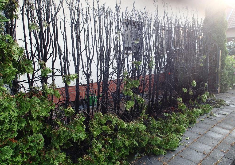 Der Brand an der Hecke drohte auf den Dachstuhl des benachbarten Hause überzugreifen. Foto: Alexander Weis