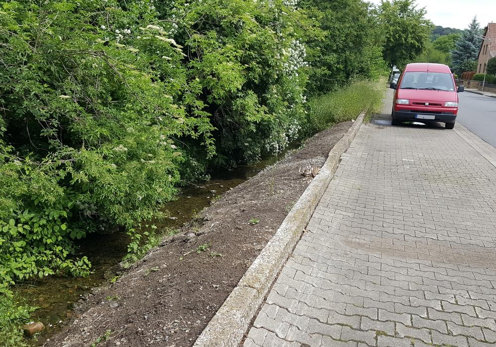 Am Hurlebach in Vienenburg fehlt die Vegetation. Auf der einen Seite des Hurlebaches herrscht dichter Blätterwald, das gegenüberliegende Ufer ist kahl. Foto: Stadt Goslar