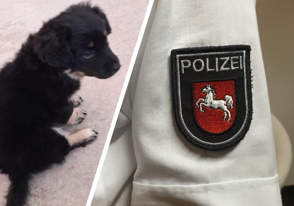 Die Polizei sucht weiterhin nach dem Besitzer des kleinen Hundebabys. Foto: Polizei Goslar/Anke Donner