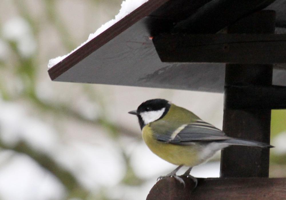 Vögel brauchen im Winter unsere Unterstützung.