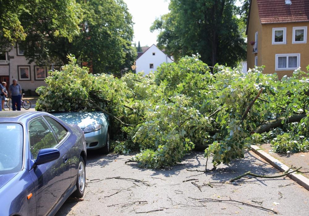 Zwei Autos wurden durch den Baum beschädigt. Fotos: Rudolf Karliczek