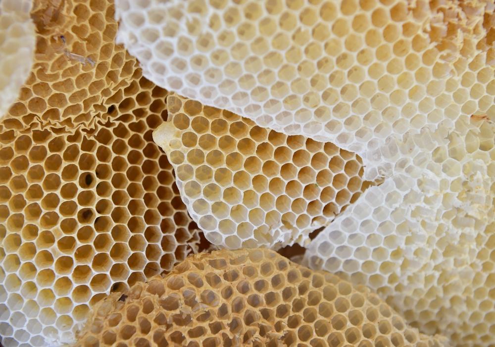 Hier entsteht der kostbare Honig. Foto: Fotoarchiv der SBK/Andreas Greiner-Napp
