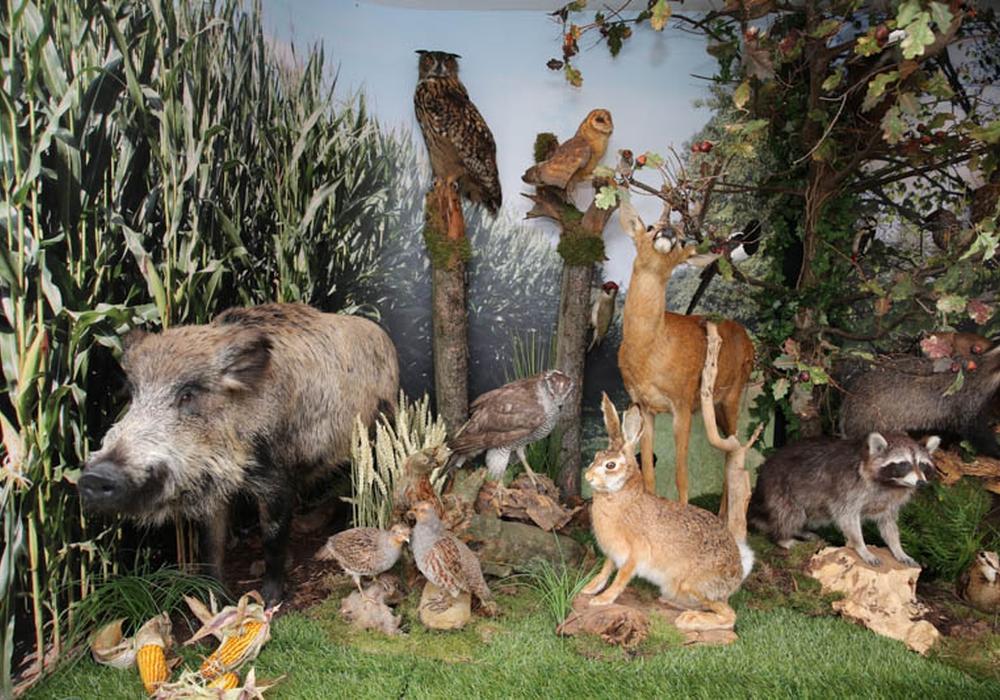 Die Jägerschaft lädt zur Hubertusfeier im Oderwald ein. Foto: Privat