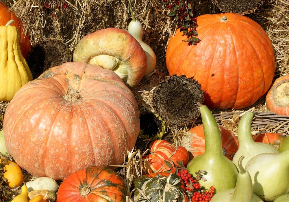 Am Sonntag wird das Erntedankfest gefeiert. Wir zeigen wo und warum gefeiert wird. Symbolfoto:  pixabay (Public Domain)