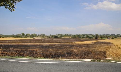 Eine große Fläche des Feldes fiel den Flammen zum Opfer.