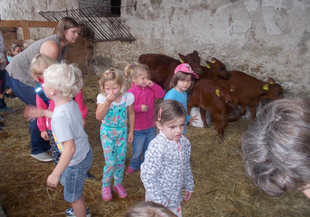 Der Kindergarten Dahlum machte einen Ausflug auf das Klostergut Heiningen. Foto: Privat