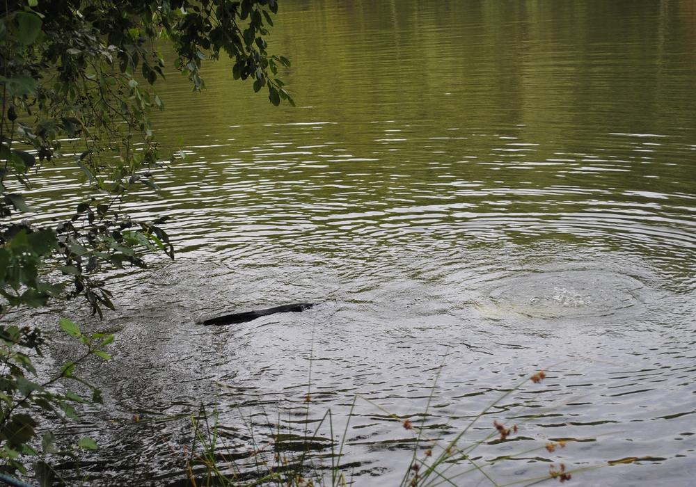 Die Grünenfraktion möchte, dass auch die Gewässer in unserer Region einer Untersuchung unterzogen werden. Symbolfoto: Marc Angerstein
