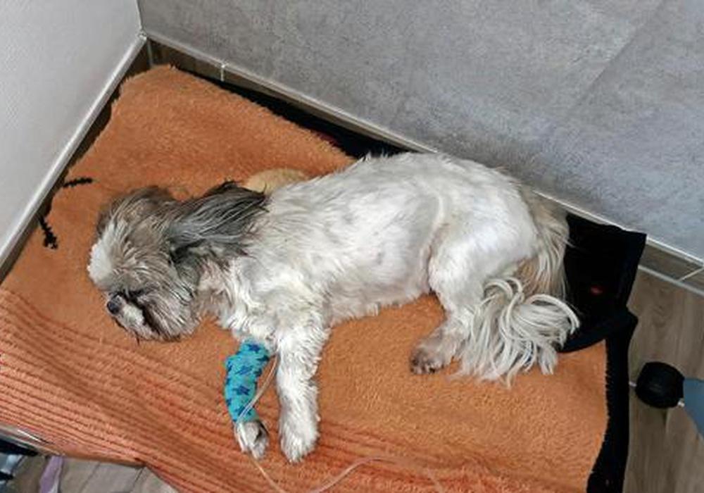 Der kleine Winz überlebte den Giftköder leider nicht. Foto: privat
