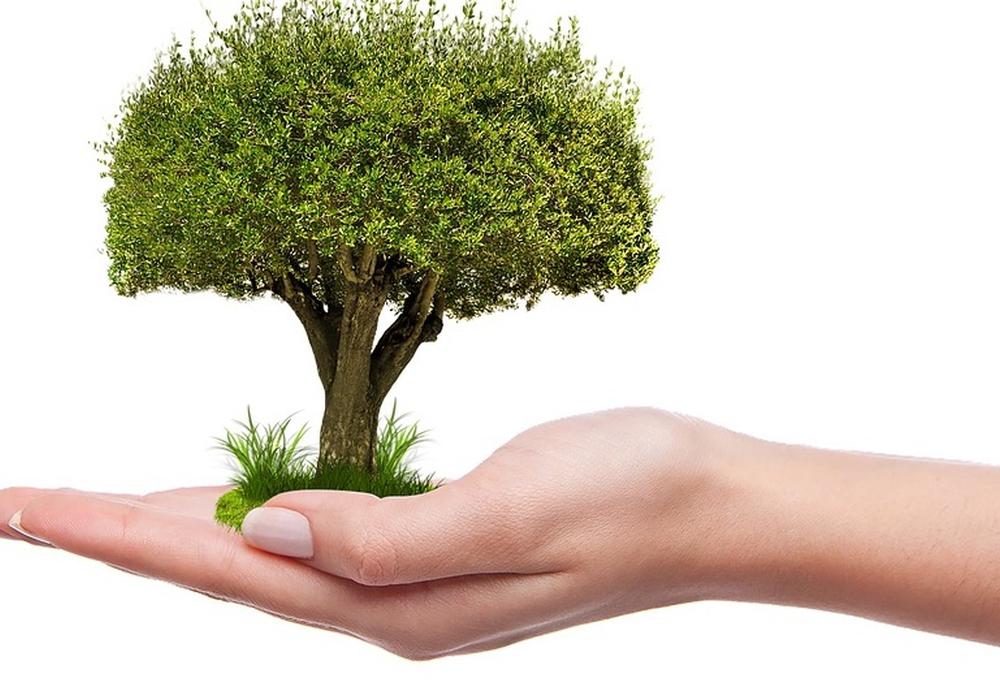 Bisher wurden im Zuge der AKtionen 8.220 Bäume in den Landesforsten gepflanzt. Symbolfoto: Pixabay