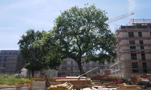 Auf den Erhalt des alten Baumbestandes wurde großer Wert gelegt.