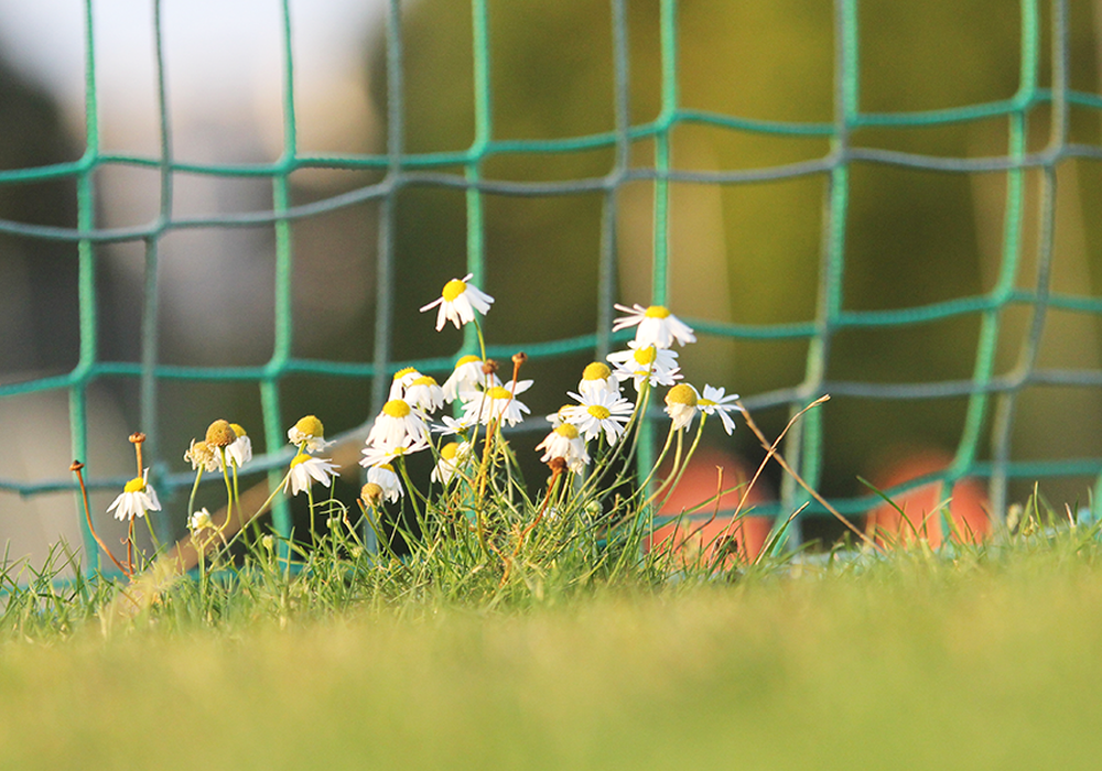 Wo sonst der Ball rollt, liegen die Sportplätze aktuell bracht. Foto: Frank Vollmer