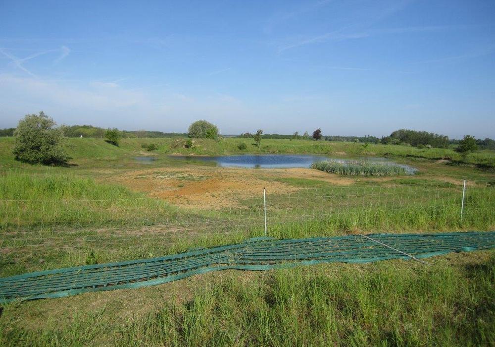 Die Untere Naturschutzbehörde des Landkreises sichert zurzeit Amphibien- und Vogellebensräume im FFH- und Landschaftsschutzgebiet Herzogsberge in Cremlingen. Foto: Landkreis Wolfenbüttel