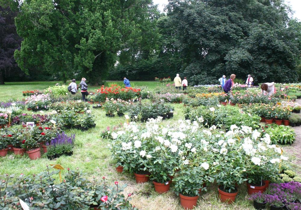 Vom 10. bis 12. Juni findet wieder der Gartenzauber im Park in Halchter statt. Foto: Anke Donner