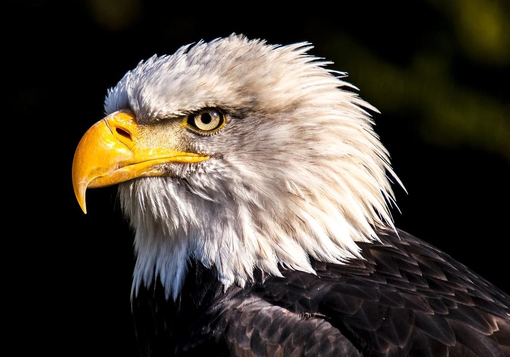 Auch wenn nicht sicher ist, ob es sich um ein Seeadlernest handelte, hätte der Wald bei einem anderem Greifvogelnest wohl nicht gerodet werden dürfen. Symbolbild: pixabay