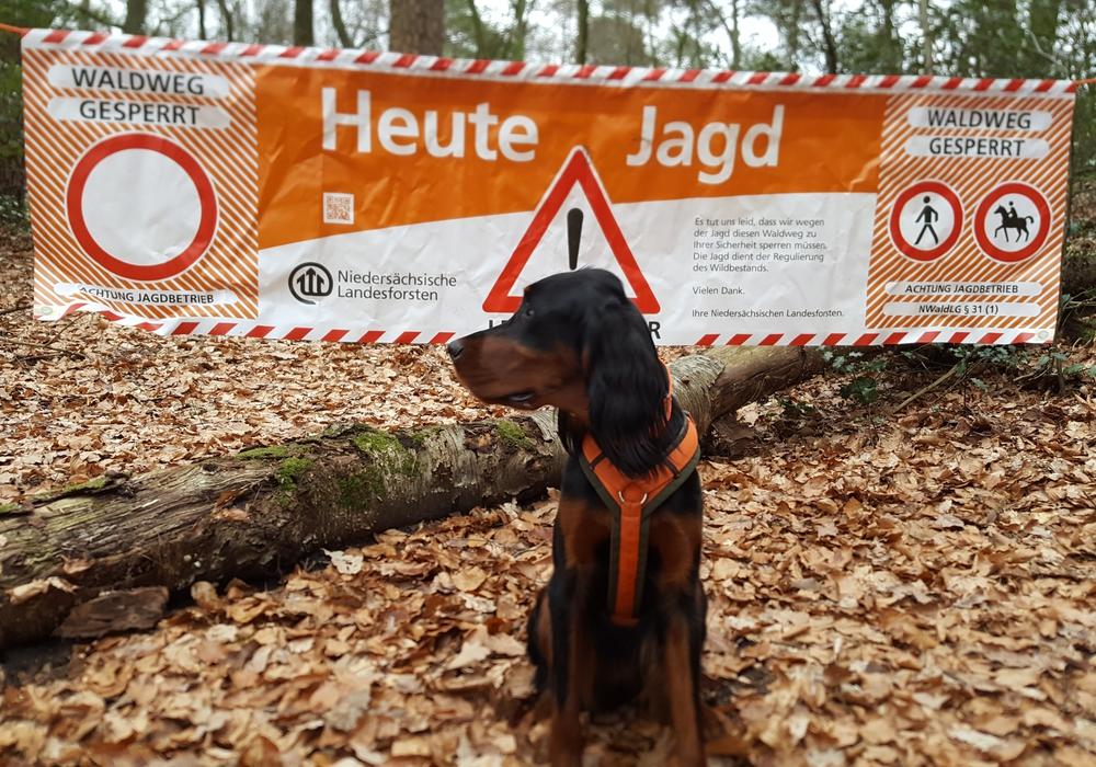 Die Niedersächsischen Landesforsten bitten die Verkehrsteilnehmer auf Wild und Jagdhunde zu achten. Foto: Niedersächsische Landesforsten