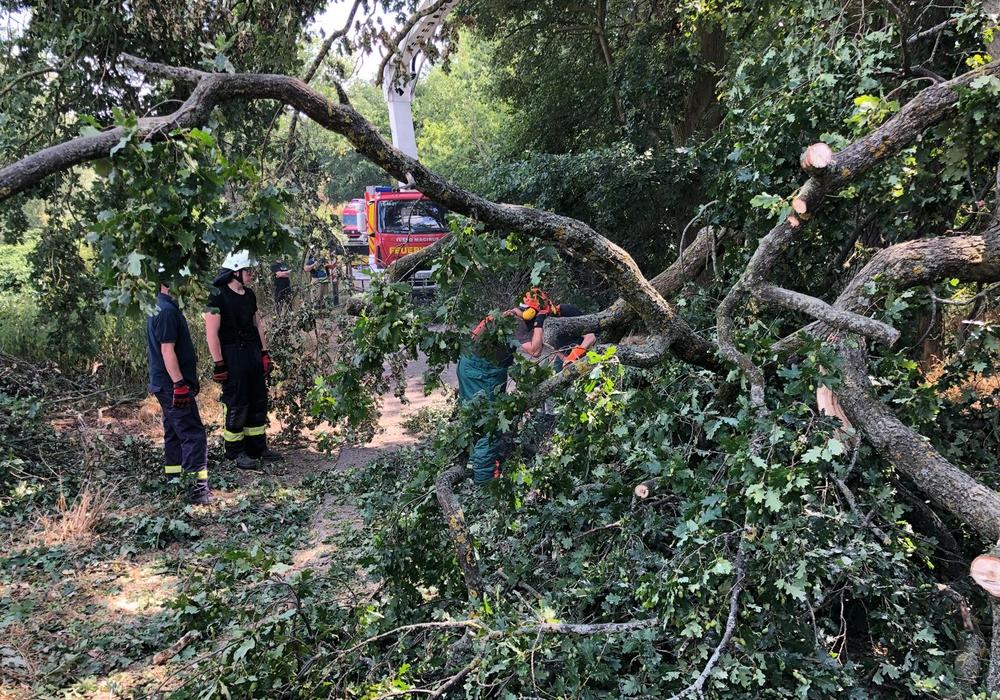 Ein Baum stürzte auf die Straße. Fotos:Feuerwehr Grasleben