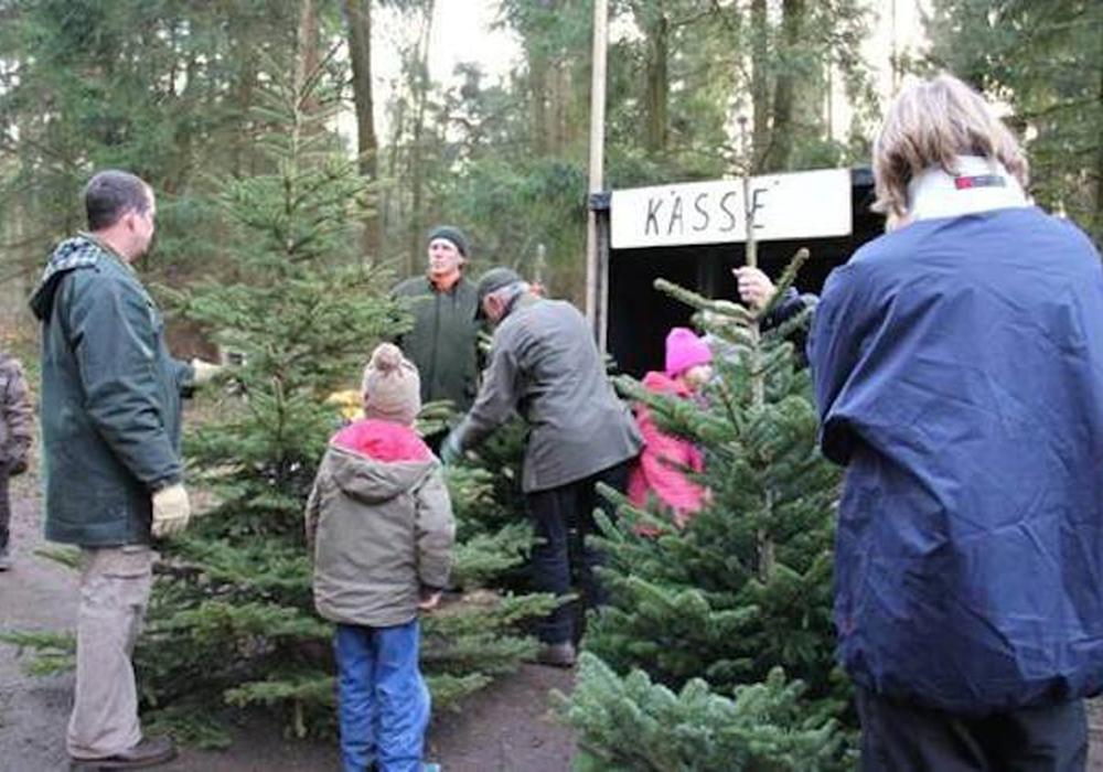 Ein Naturerlebnis für die ganze Familie:Weihnachtsbäume aussuchen und dann selbst schlagen. Foto: Niedersächsische Landesforsten