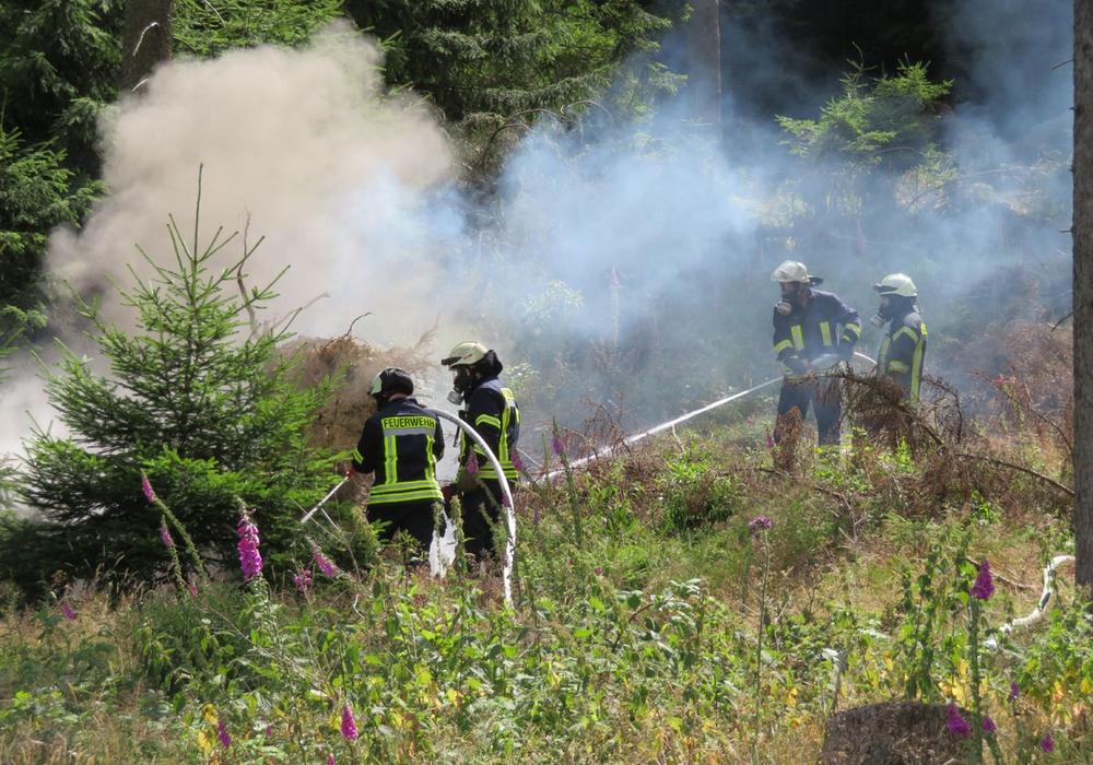 Das Feuer hatte sich bereits in den Waldboden eingefressen. Fotos: Feuerwehr
