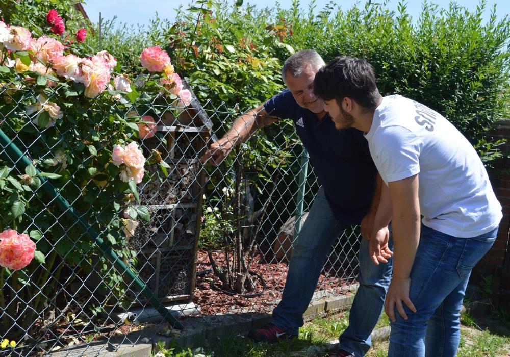 Martin Koschyk (li.) zeigt Kahledin Arabsadeh ein selbst gebautes Bienenhotel zwischen Rosenstöcken in seinem Garten. Foto: Freiwilligenagentur Jugend-Soziales-Sport e.V.