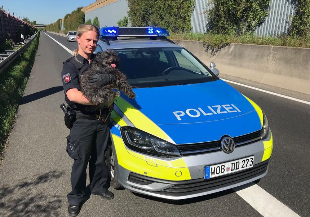 Ein Mischlingshund wurde von der Polizei auf der Autobahn zwischen den Anschlussstellen Peine und Peine-Ost aufgelesen. Foto: Polizei