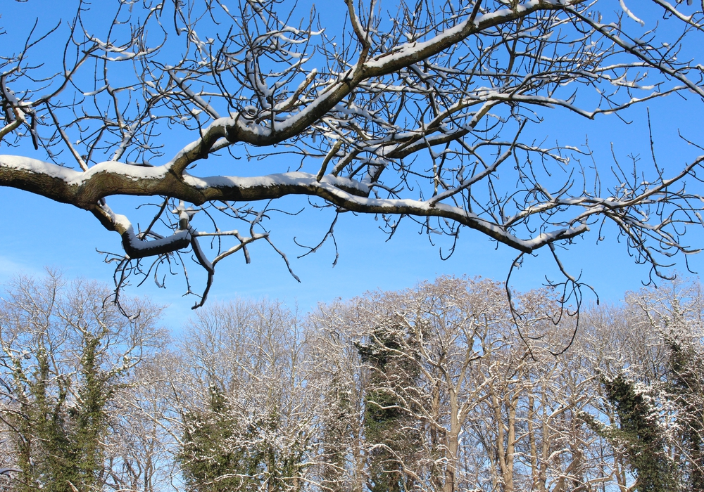 Der Winter hat auch schöne Seiten. Wir zeigen sie in unserer Foto-Strecke: Fotos: Jan Borner/Max Förster/Privat