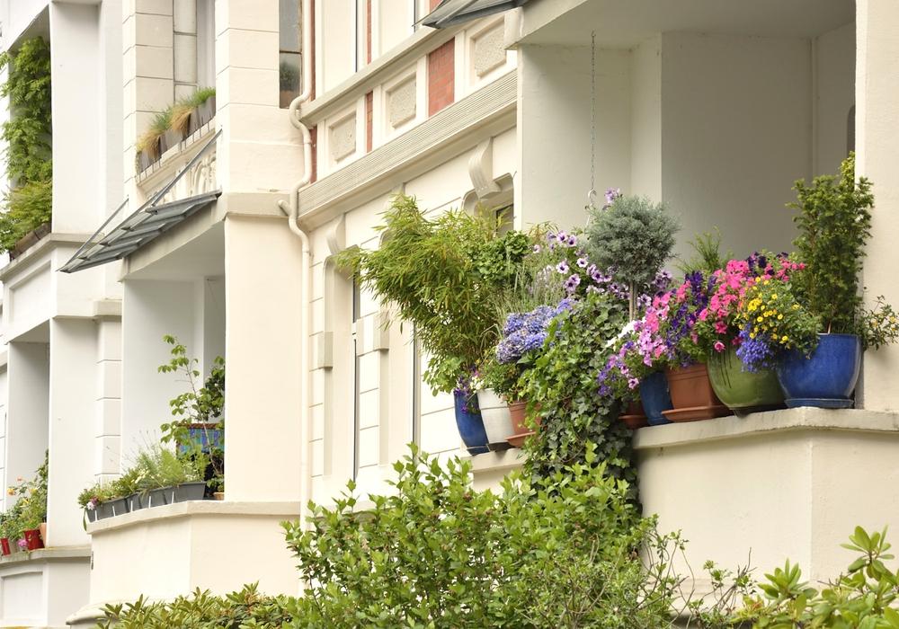 Es grünt so grün … Noch bis zum 19. Juli können Balkone zum BBG-Balkonwettbewerb angemeldet werden.(Foto: Braunschweig Stadtmarketing GmbH)