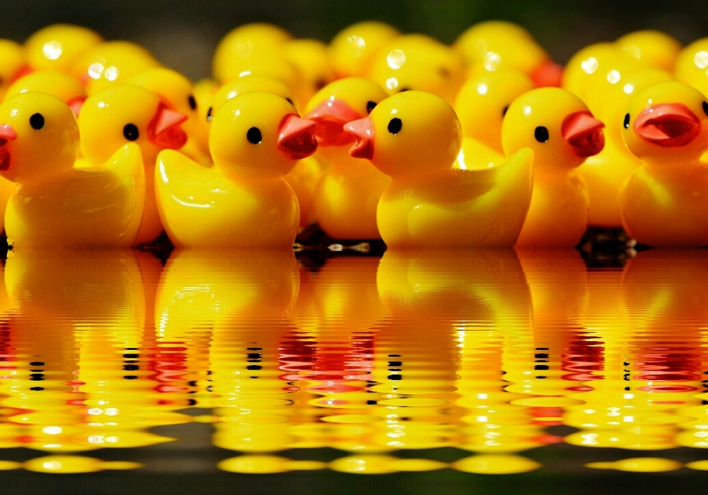 Zahlreiche Enten sollen sich auf dem Lutterbach ein spannendes rennen liefern. Foto: Pixabay