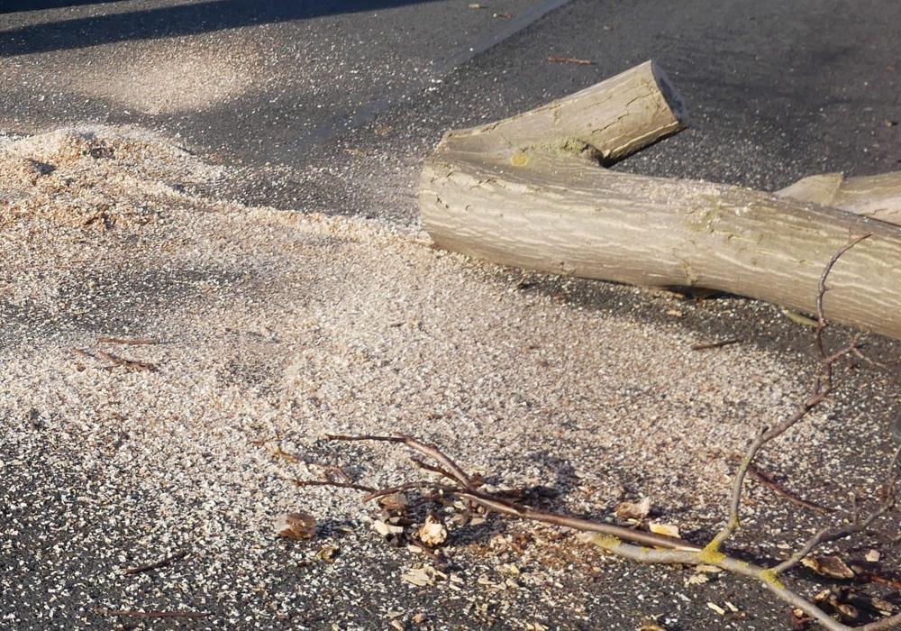 Unzählige Bäume in der Braunschweiger Straße mussten für das neue Bauprojekt weichen. Foto: Alexander Panknin