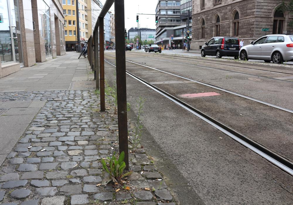 Überall in der Stadt findet sich Unkraut. Foto: Robert Braumann