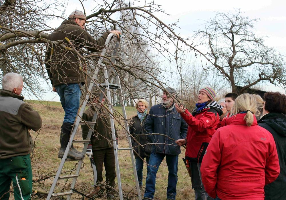Praktische Übungen an Bäumen auf dem Gänseanger.  Fotos: Bernd-Uwe Meyer